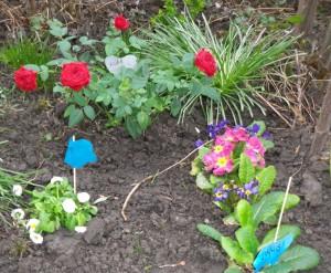 Garten_Blumen